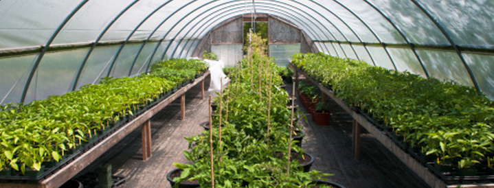 Greenhouse Insurance | Farmer